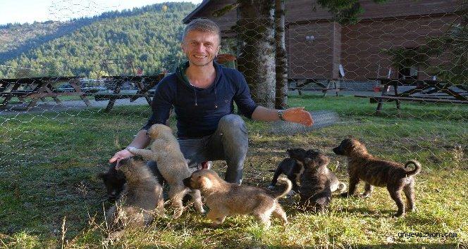 Annesiz Kalan Yavru Köpeklere Sahip Çıktı