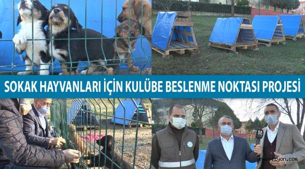 Ortak Projeyle Hayvanlara Barınak!..